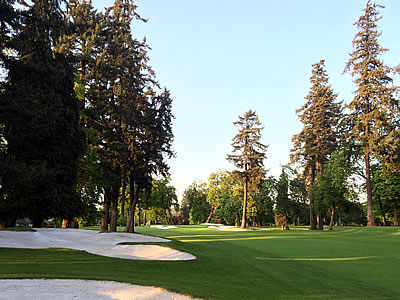 There are trees, and then there are the monsters<Br>that line the fairways of Eugene C.C. (AGC photo)
