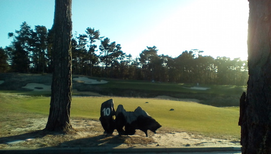 Poppy Hills, in the morning light